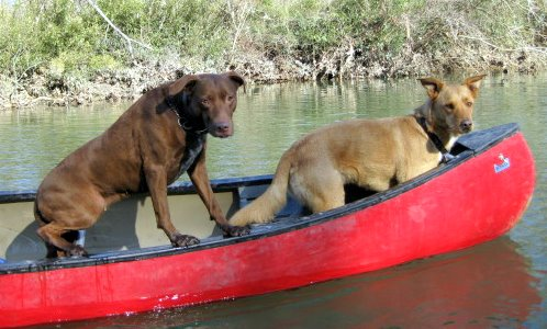 Many canoeists, like these two, are ignorant of Missouri law and couldn't care less.