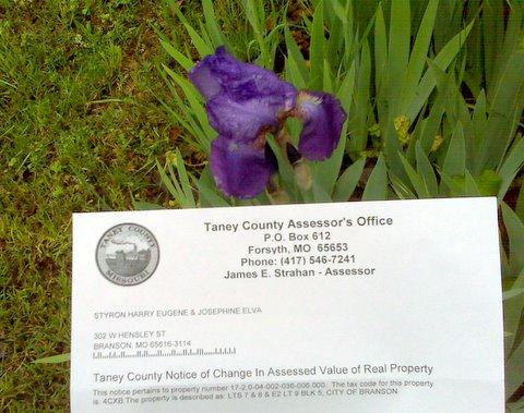 iris-and-tax-notice-002